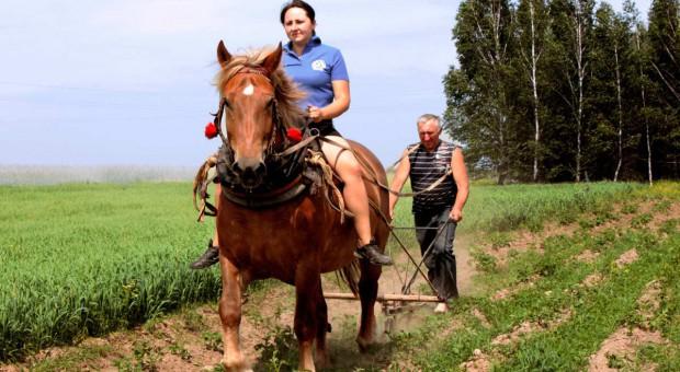 Konie - zapomniane piękno polskiej wsi
