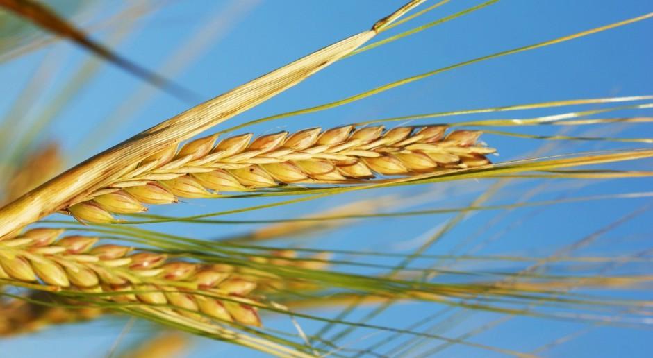 Ceny zbóż mocno w dół