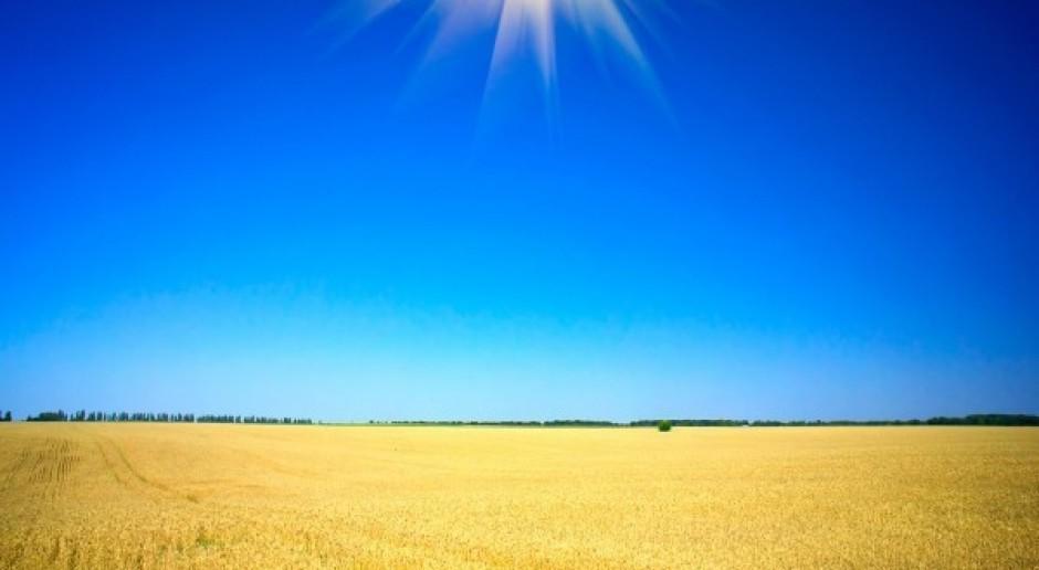 Ceny zbóż i rzepaku nie pokrywają kosztów produkcji