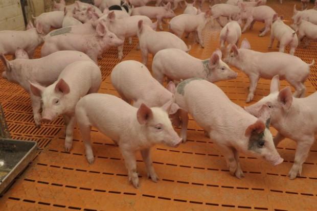 Martwy sezon dla handlu wieprzowiną