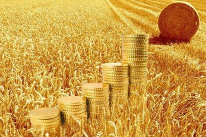 Resort rolnictwa odpowiada KRIR w sprawie cen - winny rynek
