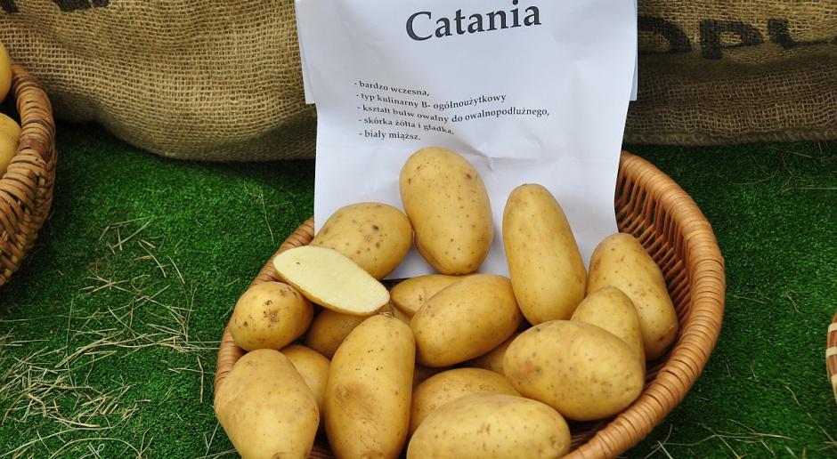 Wreszcie ziemniak o białym miąższu