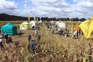 Kukurydza w roli głównej (galeria zdjęć)