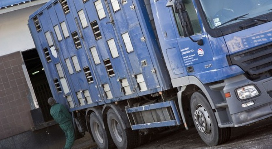 Rosja stara się uniezależnić od importu wieprzowiny
