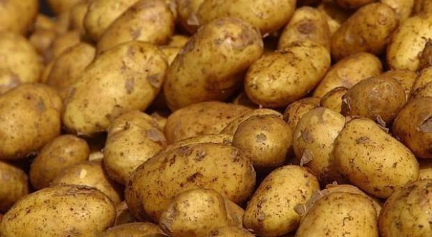 Zmiany w eksporcie ziemniaków do UE