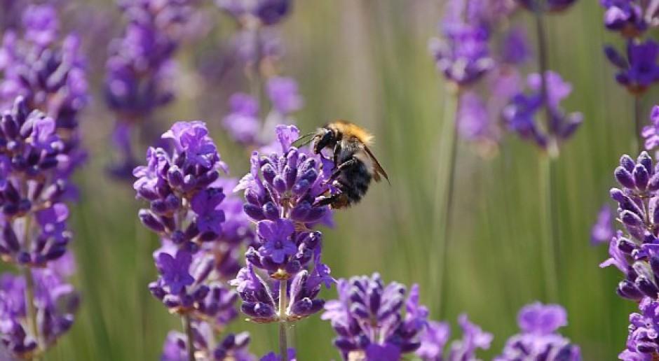 Szkoleni policjanci, aby chronić pszczoły