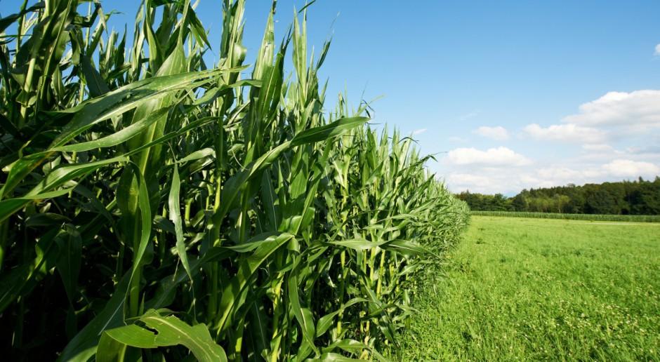Monsanto kładzie nacisk na produkcję konwencjonalną w Europie