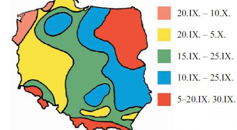 Norma i gęstość wysiewu pszenżyta ozimego
