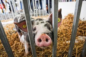 Polagra rozwija sektor hodowli