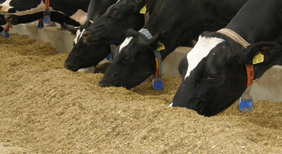 Jak, co, kiedy, ile? Tajniki żywienia krów mlecznych