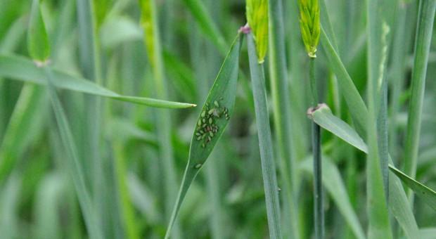 Integrowana ochrona roślin rolniczych przed szkodnikami