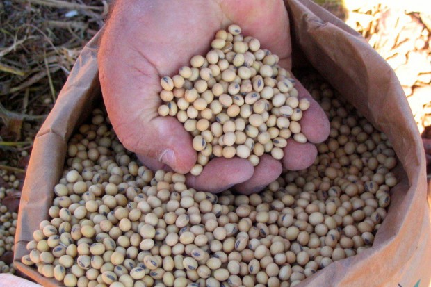 Naukowcy i producenci opracują nowoczesne techniki uprawy soi