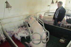 Ostra selekcja loch niezbędna w hodowli