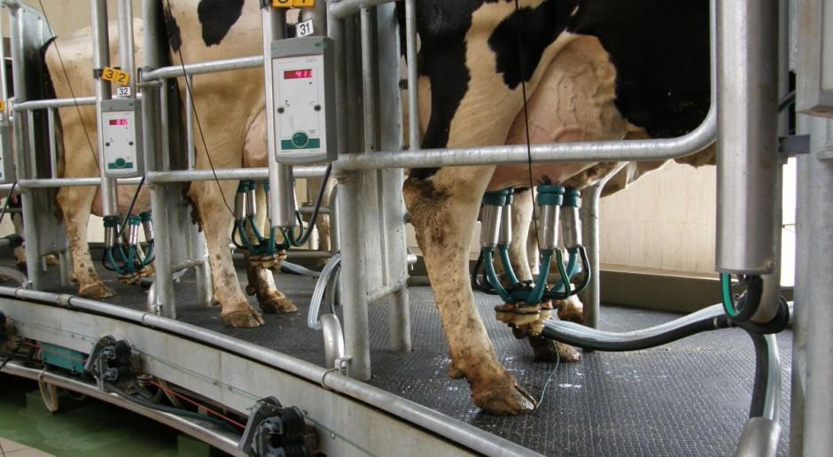 Przewidywany wzrost produkcji mleka w UE