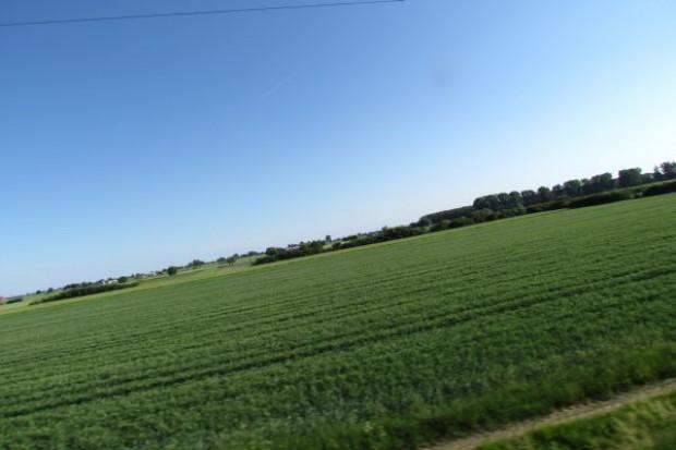 """Wzrosty cen pszenicy """"dzięki"""" Chinom i Argentynie"""