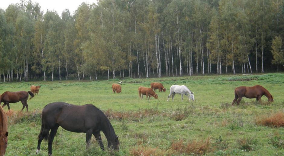 Mleko, wołowina QMP i agroturystyka w jednym gospodarstwie
