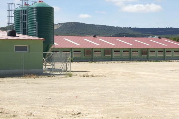 Hiszpania drugim producentem wieprzowiny w Europie