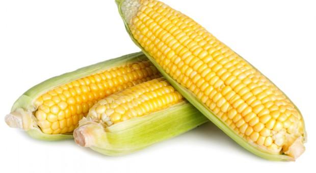 GMO wróci?