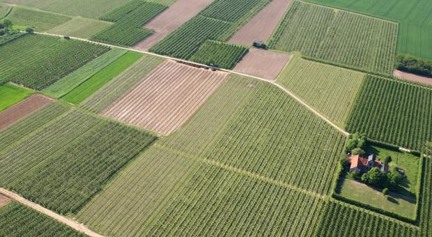 W IV kwartale pogorszenie koniunktury w rolnictwie