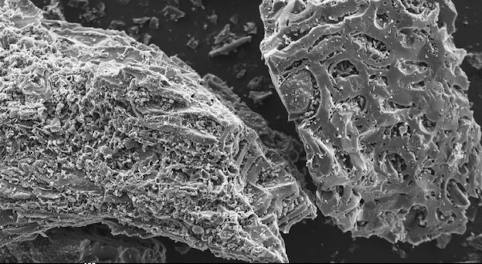 Biowęgiel jako alternatywa dla CCS