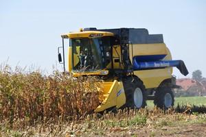 Szymańczak: Tegoroczne zbiory kukurydzy - słabe