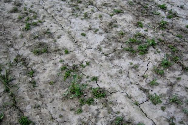 Glin, trucizna gleb kwaśnych