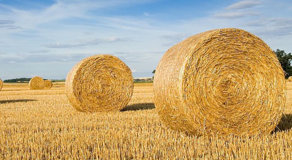 Jaki system wsparcia OZE, gdzie są rolnicy?