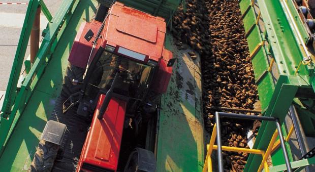 Plantatorzy nadzorują cenę akcji KSC