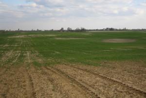 Podnieść produktywność gleb lekkich