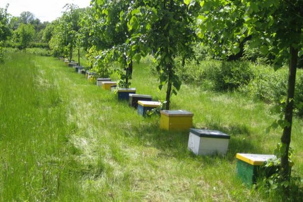 Unia stawia na pszczelarstwo