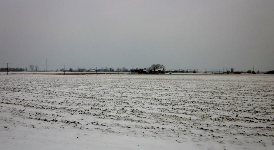 Poprószyło śniegiem, to za mało na oziminy