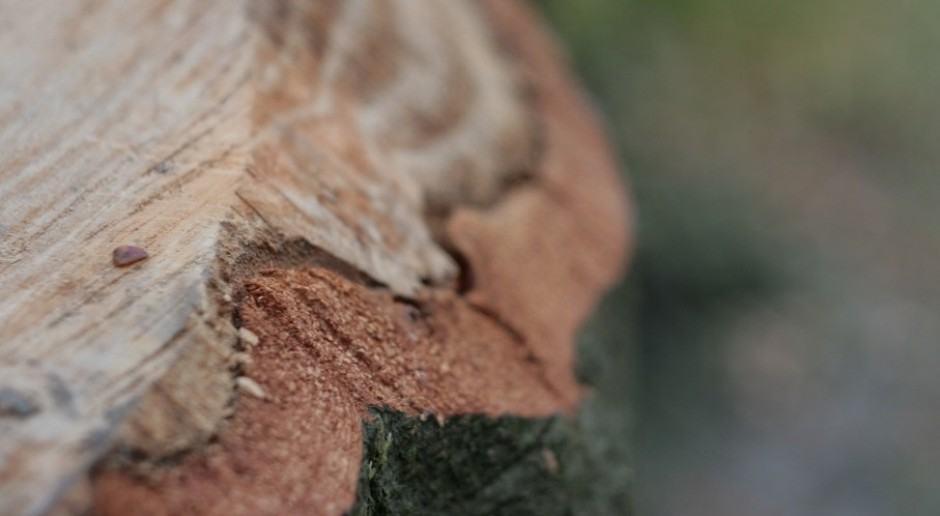 Coraz więcej energii z biomasy