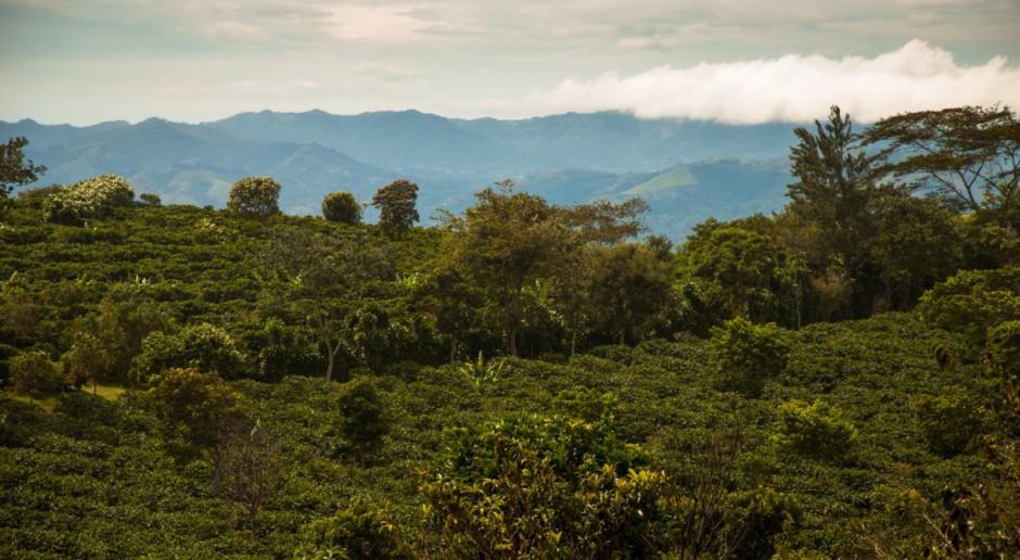 W Brazyli rekordowe upały - uprawy zagrożone