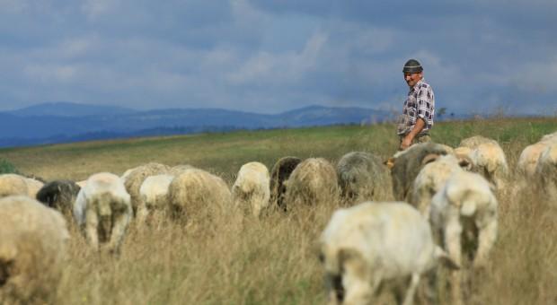 Nowe konkursy na ochronę krajobrazu poprzez tradycyjną hodowlę