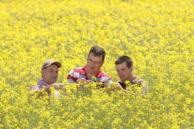 Rolnictwo krajowe ma dostarczać surowce do produkcji biopaliw