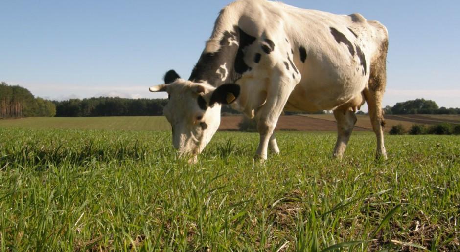 Więcej krów i większa wydajność spod oceny