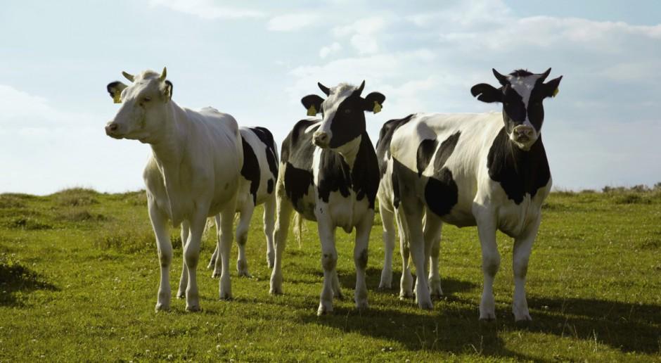 Zioła na poprawę produkcji mleka