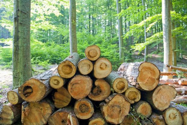 W obronie lasów i polskiej ziemi