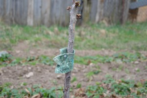 Dobroczynek gruszowiec - partner w ochronie przed przędziorkami i szpecielami