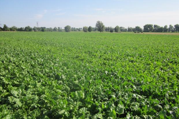90 proc. gleb Polski jest ubogich w bor