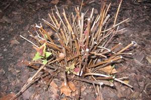 Wiosenne cięcie drzew i krzewów liściastych