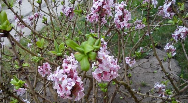 Ogrodowe zapachy