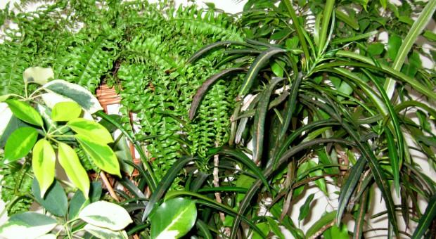 Zielona oczyszczalnia powietrza