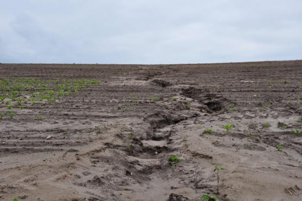 Fundusz klęskowy - nowa formuła likwidacji szkód w uprawach