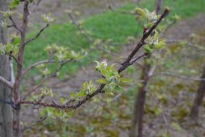 Spadki temperatur przyczyną stresów roślin