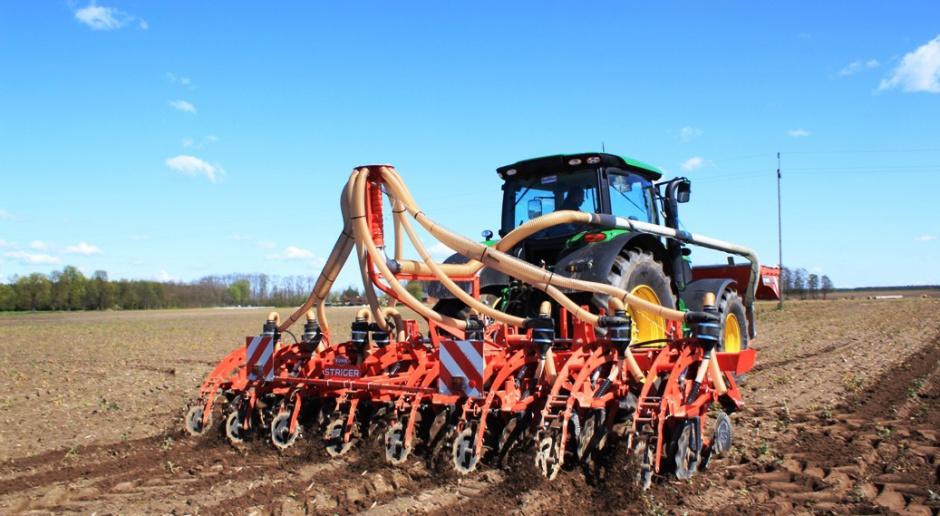 Uprawa pasowa kukurydzy