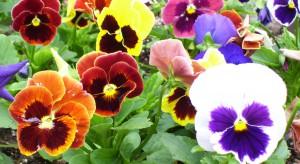Apel o ratunek dla branży ogrodniczej