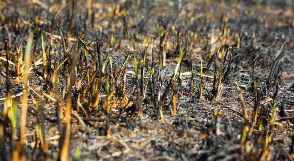 W tym roku 40 tys. pożarów traw; za ich wypalanie grozi utrata dopłat