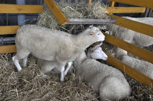 Bacowie uroczyście rozpoczęli sezon pasterski