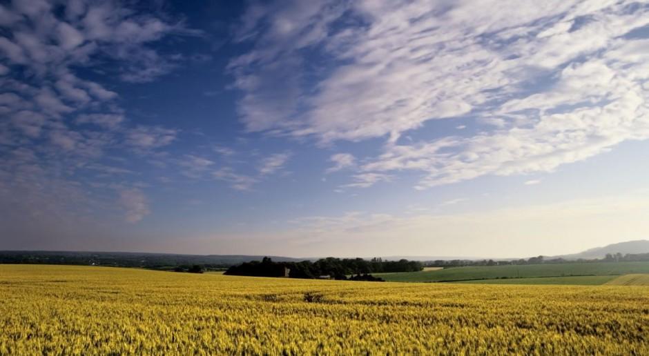 Płatności w celu utrzymania rolnictwa ekologicznego w nowym PROW